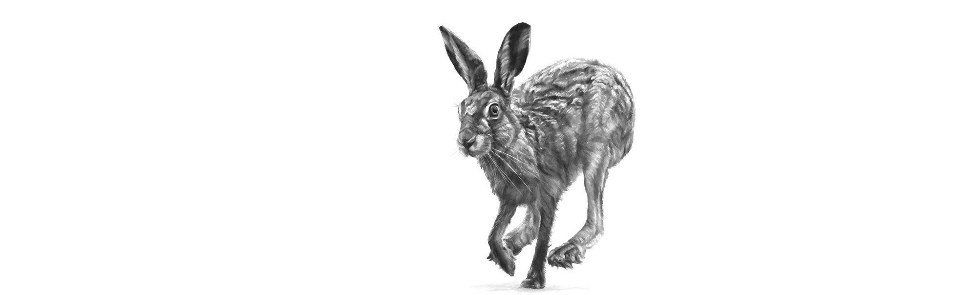 lucy-boydell-hare-drawing