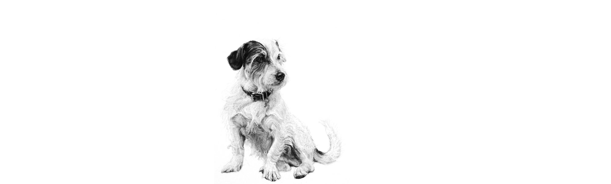 lucy-boydell-jack-drawing